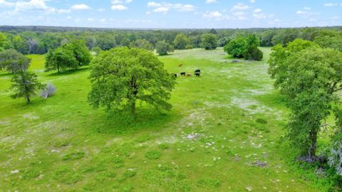 Elgin Hunting & Cattle Ranch 162 +/- acres in quiet area on Little Sandy Creek ...