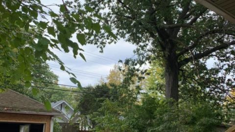 Tengo grandes y peligrosas ramas de árboles colgando de mi propiedad en ambos lados ...